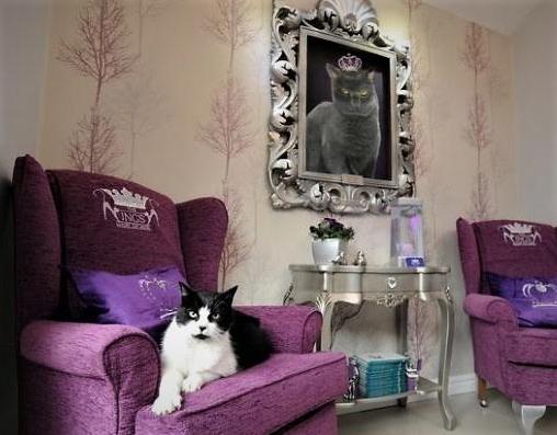 Hotel dla kotów Bella.
