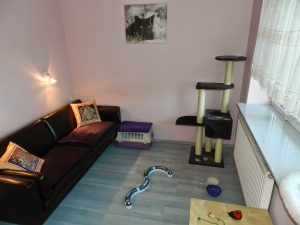 Hoteli dla Kotów Bella w warszawie - pokój Charlie