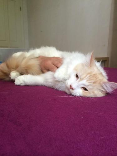 wspaniałe kocie wakacje w hotelu dla kotów bella w warszawie